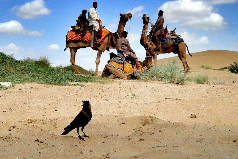 007_Thar Deserti-(INDIA)-WS