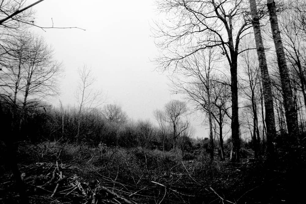 Dentro-il-bosco-002