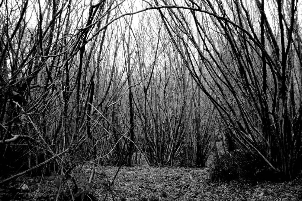 Dentro-il-bosco-004